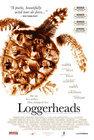 loggerheads.jpg